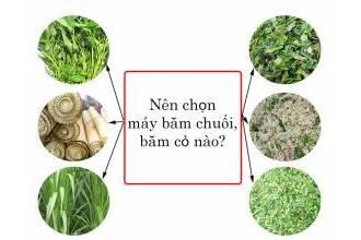 Cách chọn lựa loại máy băm chuối, băm cỏ phù hợp nhất